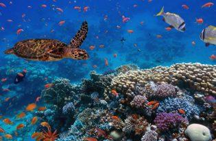 La IA puede ayudar a salvar los océanos portada