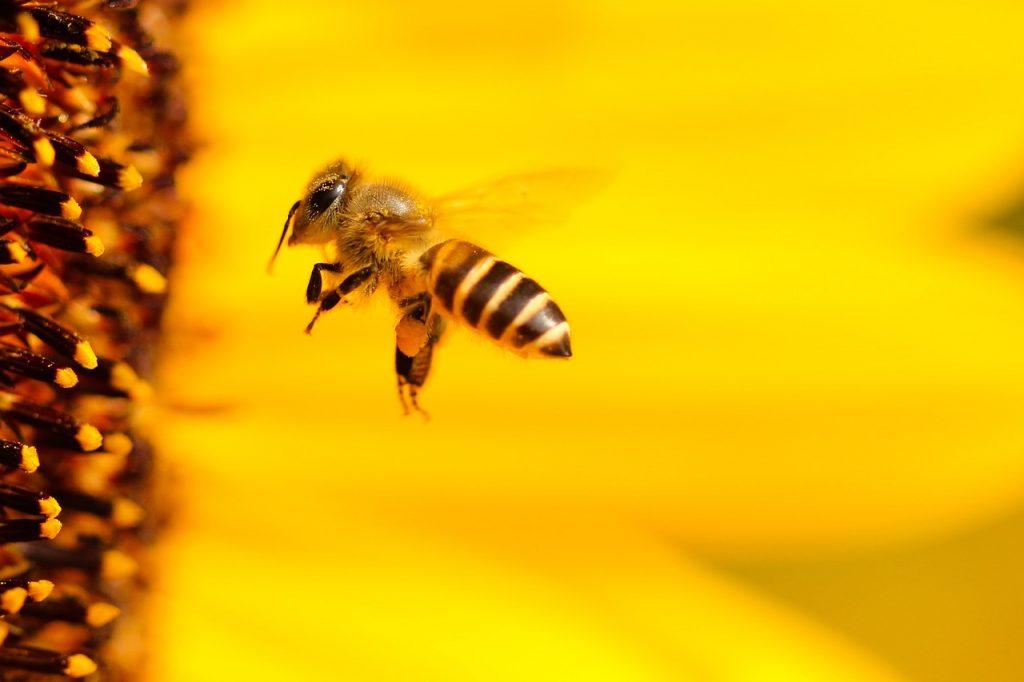 Vuelo de las abejas podría mejorar a los drones.