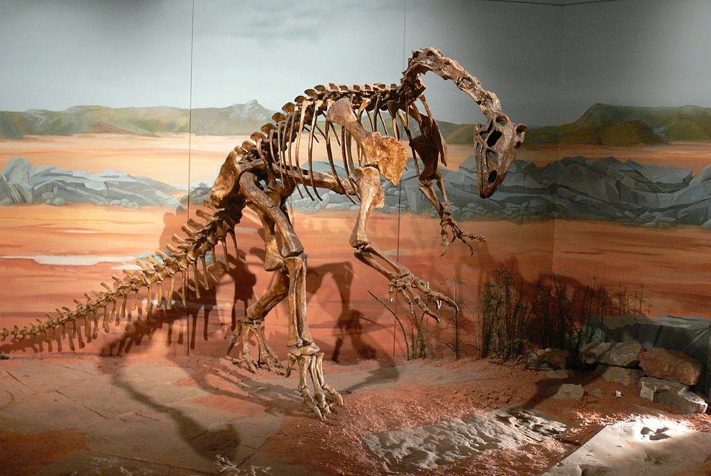 Fósiles de un Thecodontosaurus.